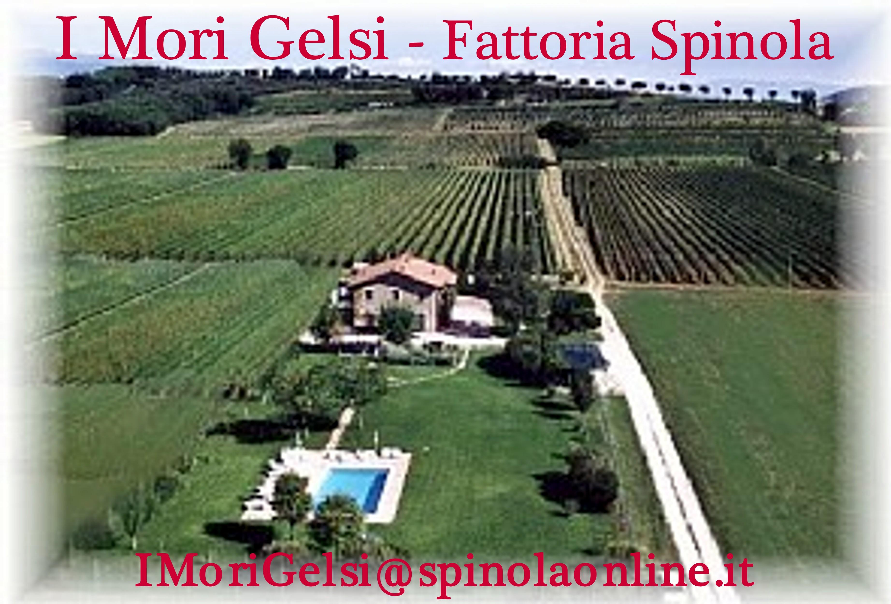 Agriturismo I MORI GELSI - Fattoria Spinola
